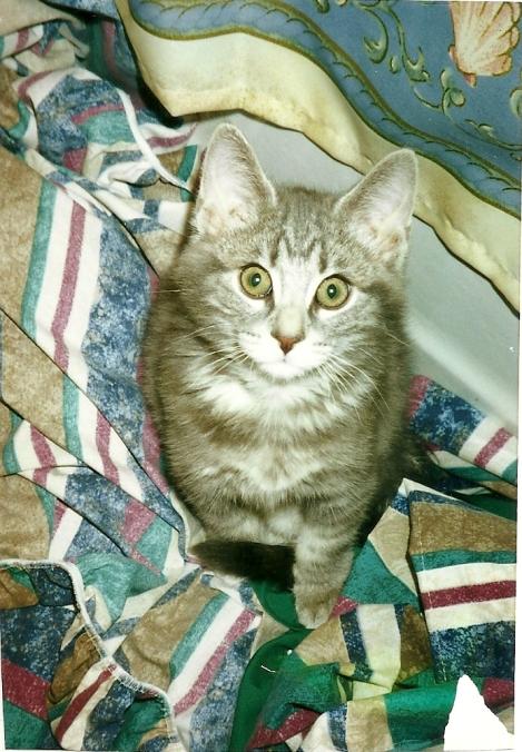 Ozzy as a Kitten