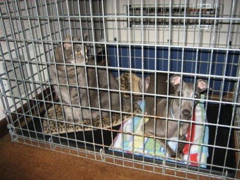 Pet Emergency Preparedness (1)