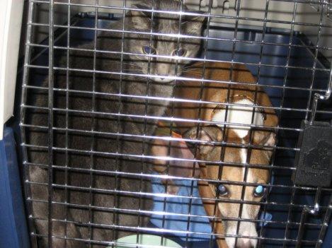 Pet Emergency Preparedness (2)