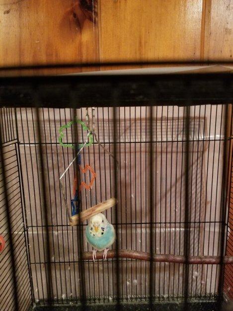 blue suede bird (2)