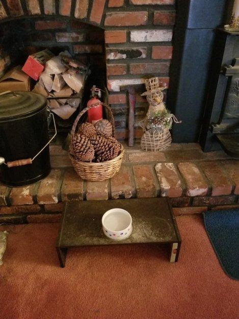 Old Dog Accommodations (1)