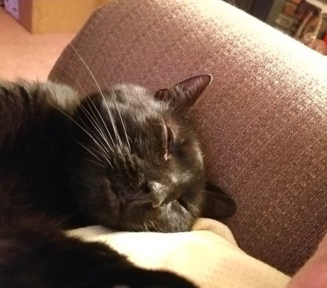 Appreciating the Black Cat's Gotcha Day (1).jpg