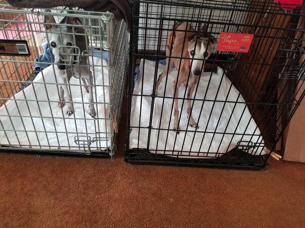 Quarantine Canines
